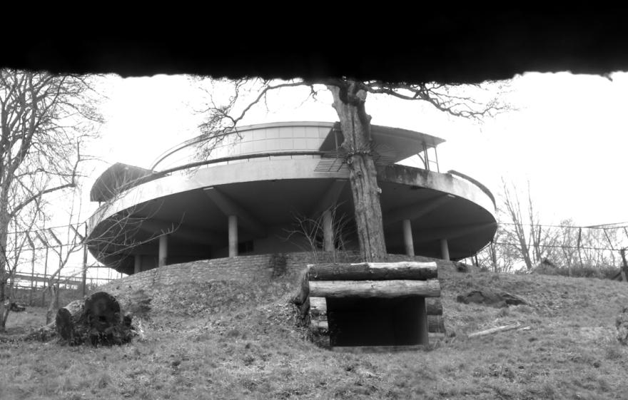 tropical bird house
